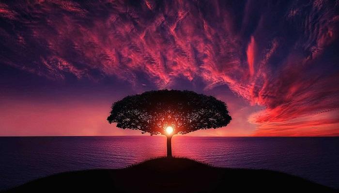 大きな木と夕焼け